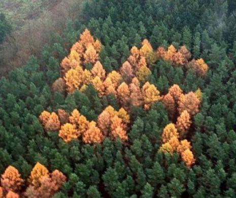 """Misterul """"Pădurii cu Svastică"""" de pe vremea lui Hitler"""