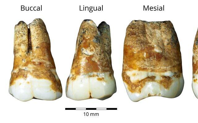 Dinţii din grota din Manot.