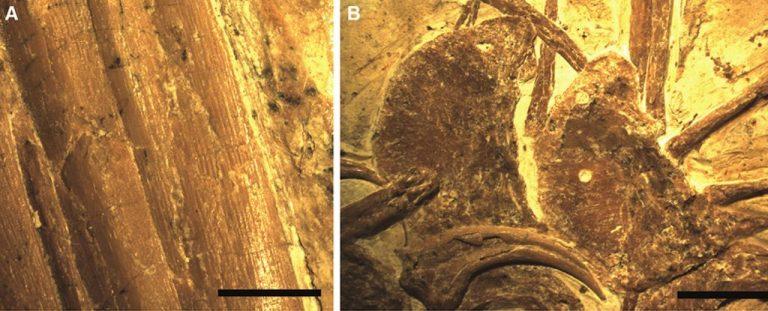 """Cercetătorii au găsit """"veriga lipsă"""" între dinozauri și păsări în China"""