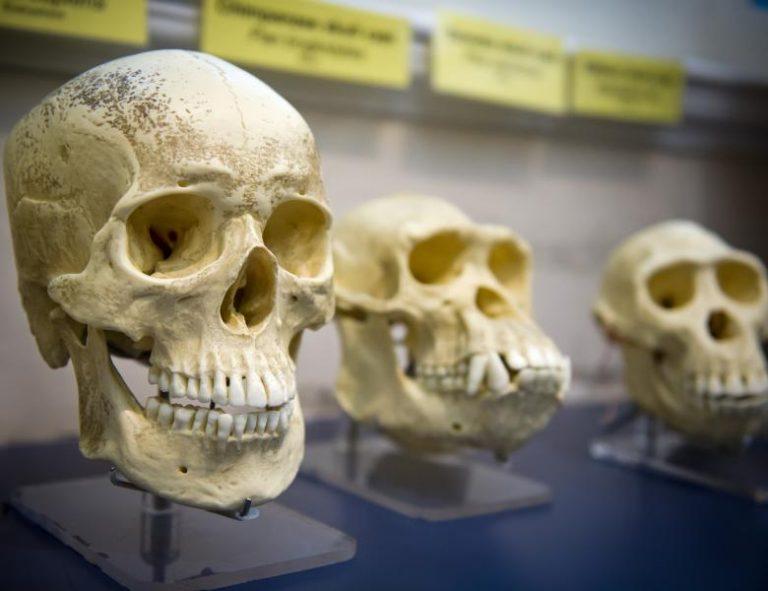 Cercetătorii au descoperit urme ale unei populații misterioase care a trăit acum 500 de mii de ani în Africa