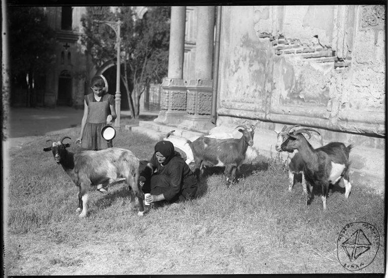 Mulsul caprei în centrul Bucureștiului și fetița care e nerăbdătoare să urce în scrânciob. Fotografii de colecție