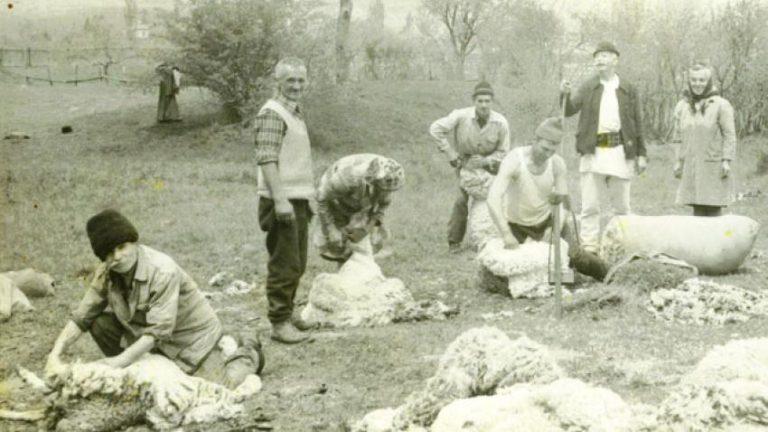 Judele Braşovului dă șpagă lui Radul vel Comis ca să intervină la Domn pentru scutirea de dijmă a oilor lui