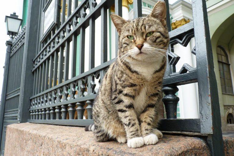 Cum au salvat pisicile siberiene operele de artă de la Ermitaj