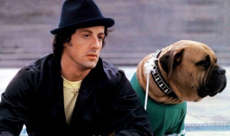 Cum și-a vândut Sylvester Stallone câinele cu 40 de dolari și l-a cumpărat înapoi cu 15.000